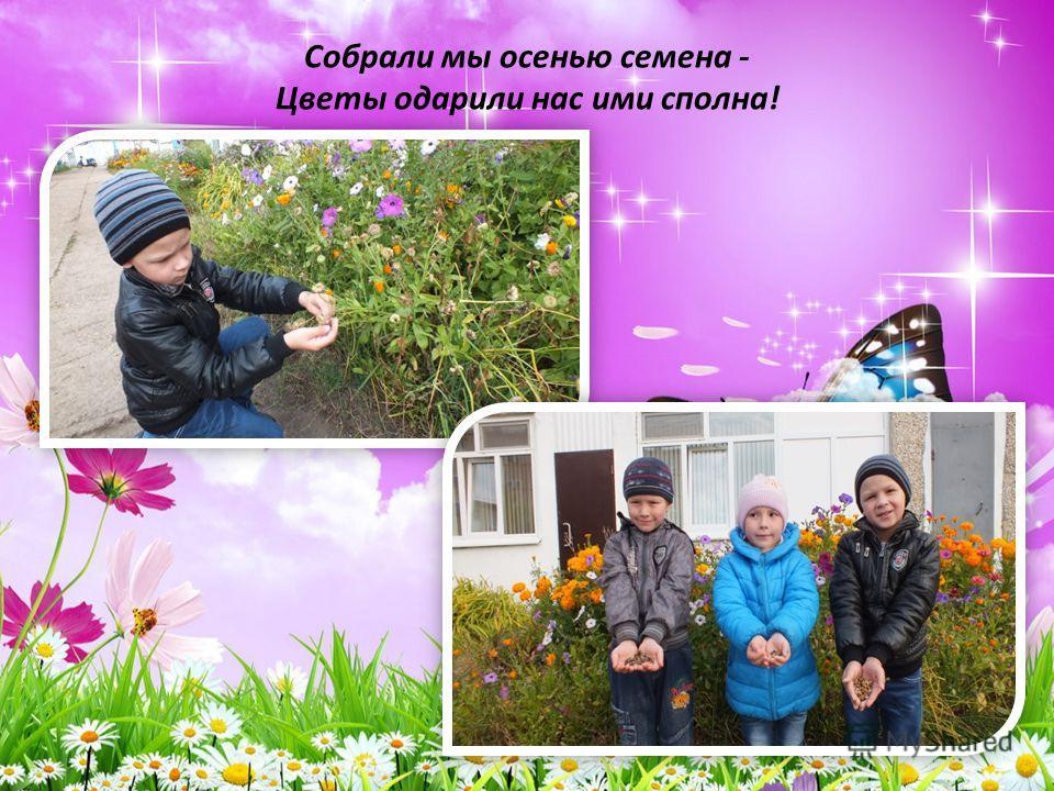Собрали мы осенью семена - Цветы одарили нас ими сполна!