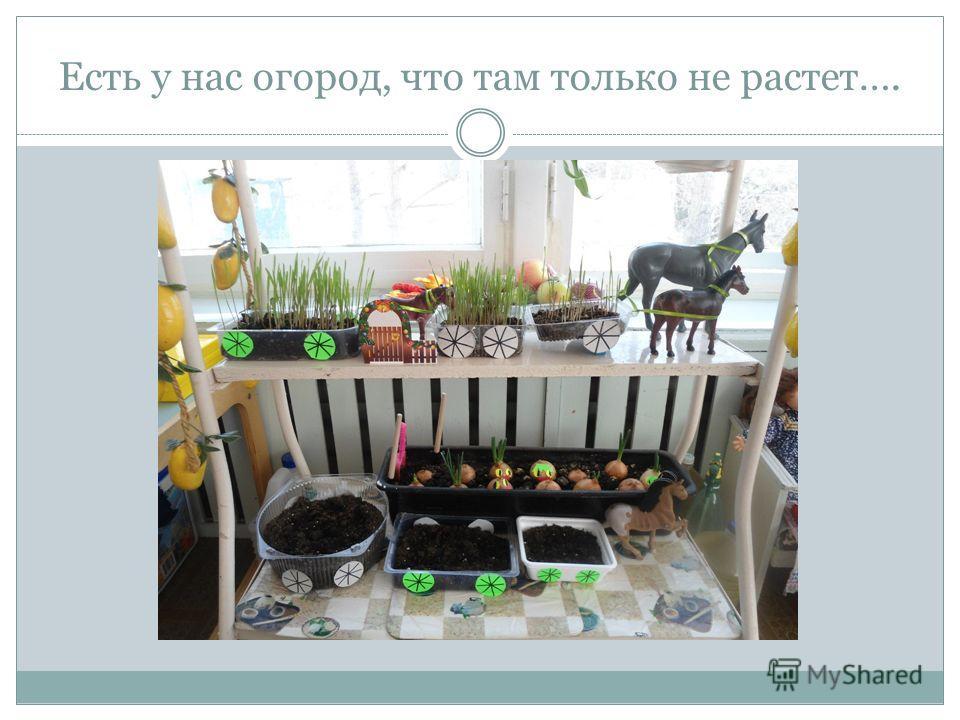 Есть у нас огород, что там только не растет….