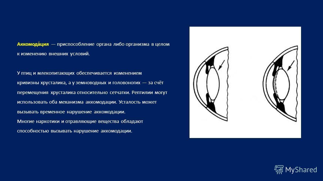 Аккомода́ция приспособление органа либо организма в целом к изменению внешних условий. У птиц и млекопитающих обеспечивается изменением кривизны хрусталика, а у земноводных и головоногих за счёт перемещения хрусталика относительно сетчатки. Рептилии