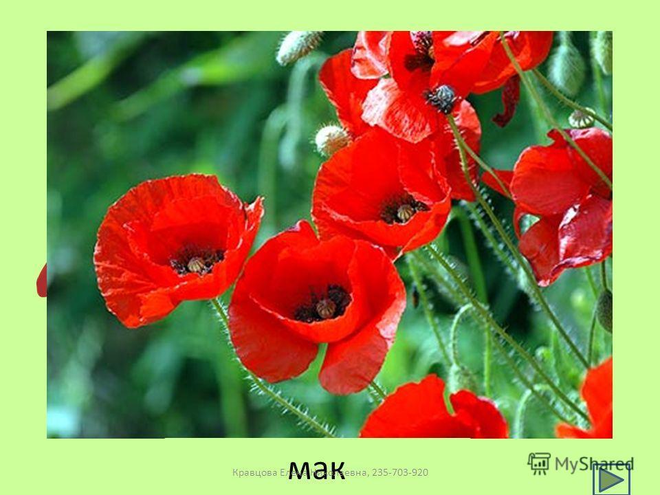 мак Кравцова Елена Николаевна, 235-703-920