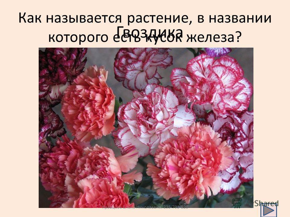 Как называется растение, в названии которого есть кусок железа? Гвоздика Кравцова Елена Николаевна, 235-703-920