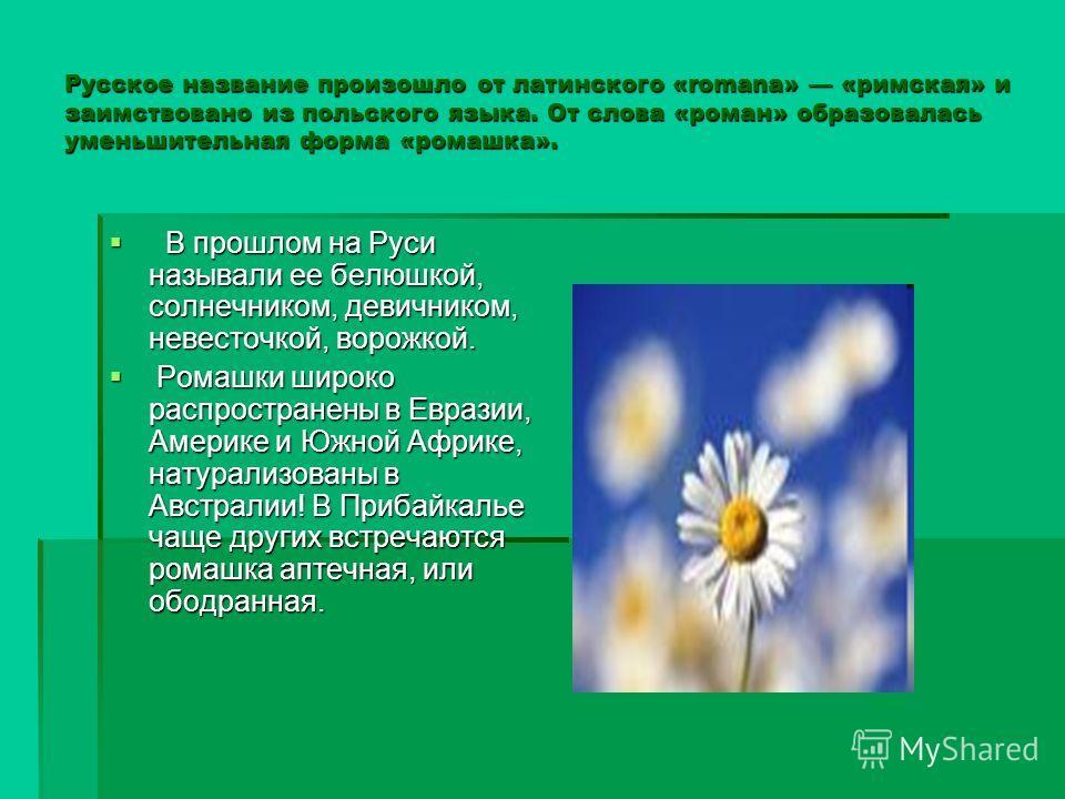 Русское название произошло от латинского «romana» «римская» и заимствовано из польского языка. От слова «роман» образовалась уменьшительная форма «ромашка». В прошлом на Руси называли ее белюшкой, солнечником, девичником, невесточкой, ворожкой. В про