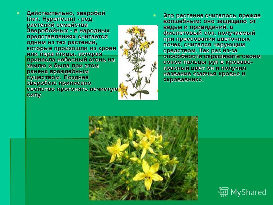 Действительно, зверобой (лат. Hypericum) - род растений семейства Зверобойных - в народных представлениях считается одним из тех растений, которые произошли из крови или пера птицы, которая принесла небесный огонь на землю и была при этом ранена враж