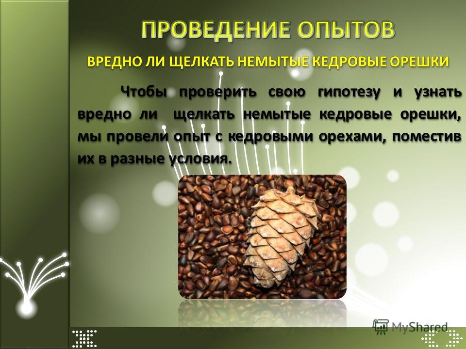 Чтобы проверить свою гипотезу и узнать вредно ли щелкать немытые кедровые орешки, мы провели опыт с кедровыми орехами, поместив их в разные условия. ВРЕДНО ЛИ ЩЕЛКАТЬ НЕМЫТЫЕ КЕДРОВЫЕ ОРЕШКИ
