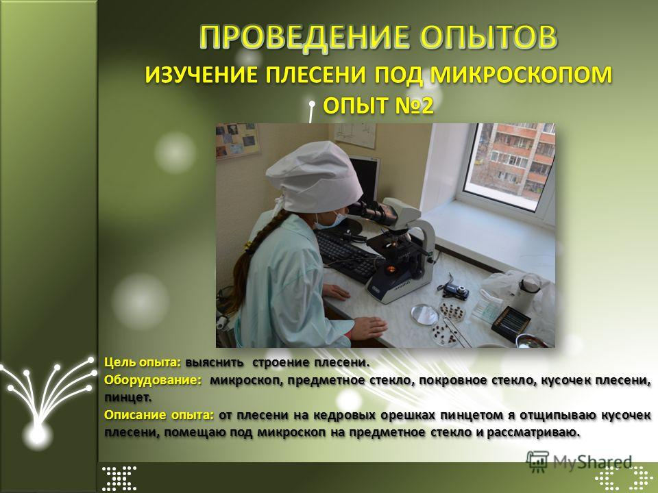 ОПЫТ 2 Цель опыта: выяснить строение плесени. Оборудование: микроскоп, предметное стекло, покровное стекло, кусочек плесени, пинцет. Описание опыта: от плесени на кедровых орешках пинцетом я отщипываю кусочек плесени, помещаю под микроскоп на предмет