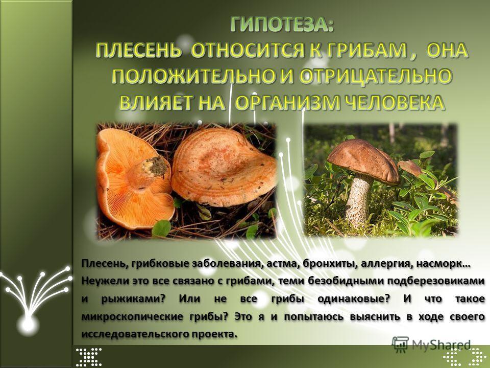 Плесень, грибковые заболевания, астма, бронхиты, аллергия, насморк… Неужели это все связано с грибами, теми безобидными подберезовиками и рыжиками? Или не все грибы одинаковые? И что такое микроскопические грибы? Это я и попытаюсь выяснить в ходе сво