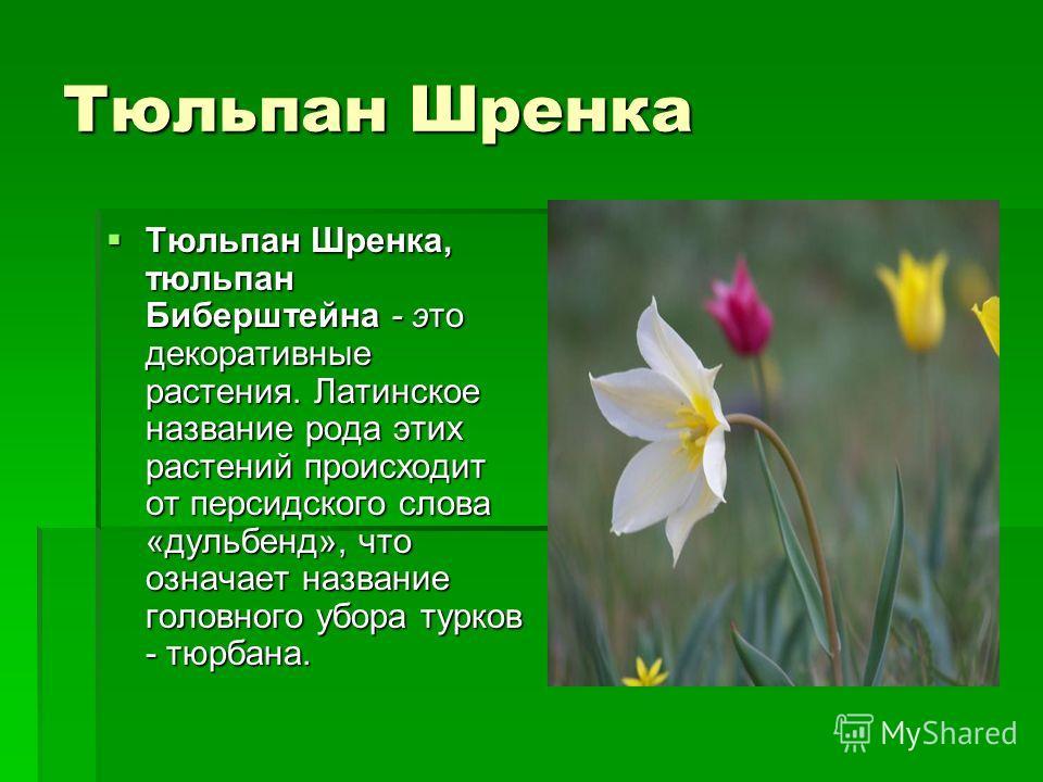 Тюльпан Шренка Тюльпан Шренка, тюльпан Биберштейна - это декоративные растения. Латинское название рода этих растений происходит от персидского слова «дульбенд», что означает название головного убора турков - тюрбана. Тюльпан Шренка, тюльпан Бибершт