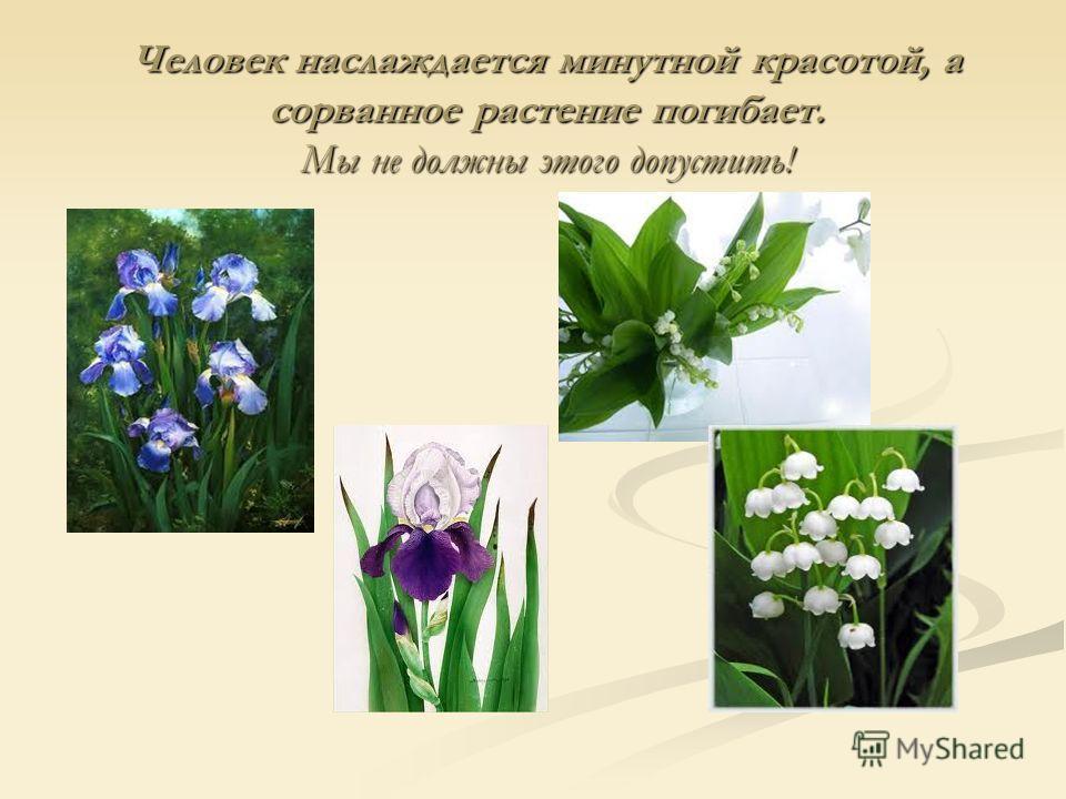 Человек наслаждается минутной красотой, а сорванное растение погибает. Мы не должны этого допустить!