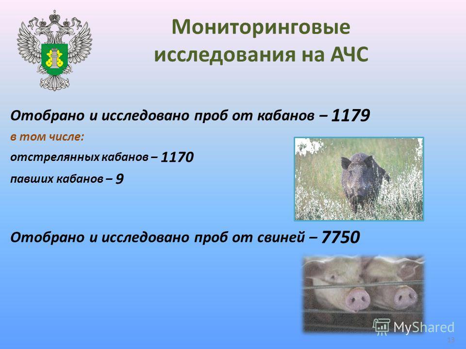 Мониторинговые исследования на АЧС Отобрано и исследовано проб от кабанов – 1179 в том числе: отстрелянных кабанов – 1170 павших кабанов – 9 Отобрано и исследовано проб от свиней – 7750 13
