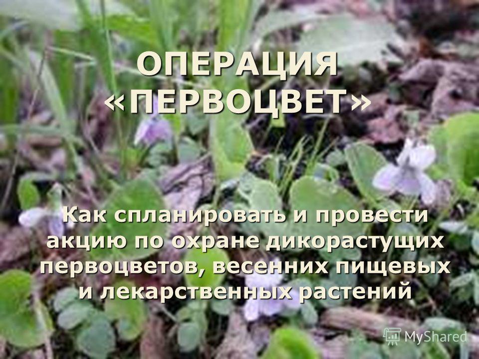 ОПЕРАЦИЯ «ПЕРВОЦВЕТ ОПЕРАЦИЯ «ПЕРВОЦВЕТ» Как спланировать и провести акцию по охране дикорастущих первоцветов, весенних пищевых и лекарственных растений
