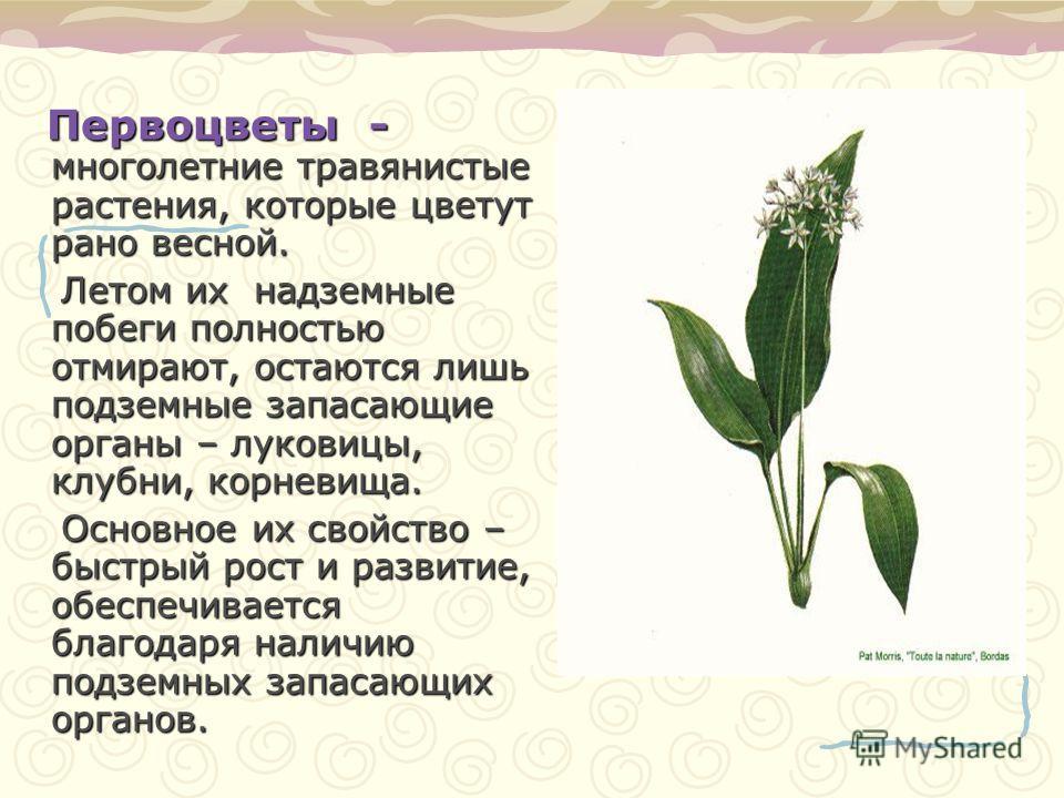 Первоцветы - многолетние травянистые растения, которые цветут рано весной. Летом их надземные побеги полностью отмирают, остаются лишь подземные запасающие органы – луковицы, клубни, корневища. Летом их надземные побеги полностью отмирают, остаются л