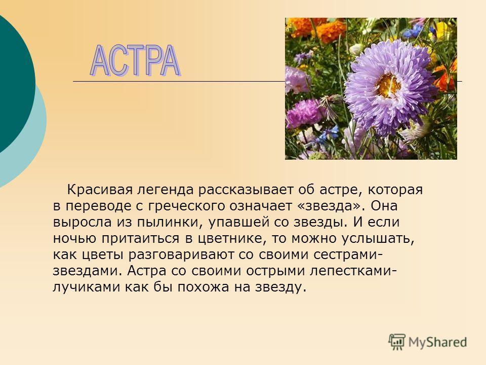 Рассказ о цветах осеннего цветок