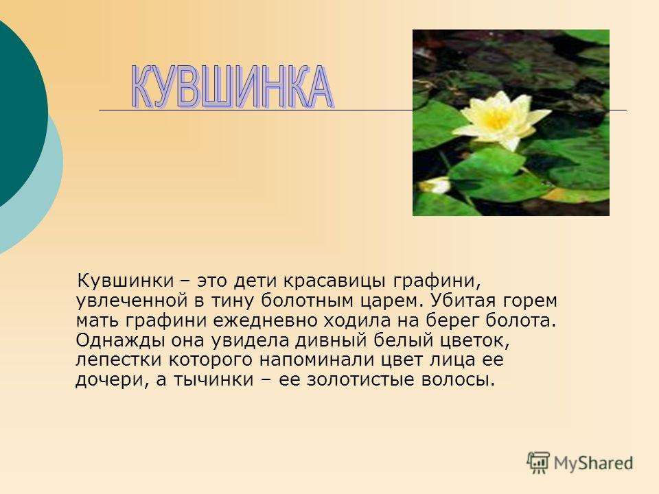 Кувшинки – это дети красавицы графини, увлеченной в тину болотным царем. Убитая горем мать графини ежедневно ходила на берег болота. Однажды она увидела дивный белый цветок, лепестки которого напоминали цвет лица ее дочери, а тычинки – ее золотистые
