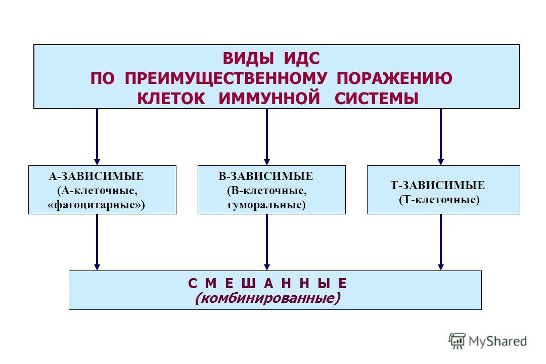 ВИДЫ ИДС ПО ПРЕИМУЩЕСТВЕННОМУ ПОРАЖЕНИЮ КЛЕТОК ИММУННОЙ СИСТЕМЫ С М Е Ш А Н Н Ы Е (комбинированные) А-ЗАВИСИМЫЕ (А-клеточные, «фагоцитарные») В-ЗАВИСИМЫЕ (В-клеточные, гуморальные) Т-ЗАВИСИМЫЕ (Т-клеточные)