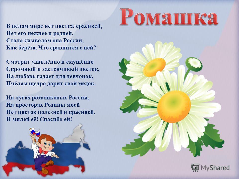 В целом мире нет цветка красивей, Нет его нежнее и родней. Стала символом она России, Как берёза. Что сравнится с ней? Смотрит удивлённо и смущённо Скромный и застенчивый цветок, На любовь гадает для девчонок, Пчёлам щедро дарит свой медок. На лугах