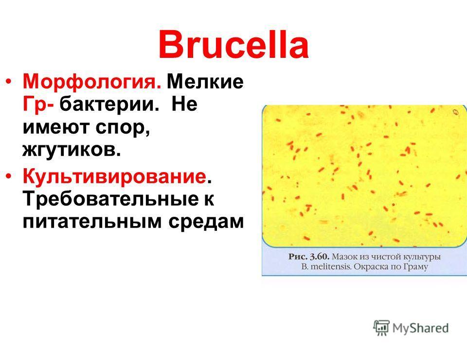 Brucella Морфология. Мелкие Гр- бактерии. Не имеют спор, жгутиков. Культивирование. Требовательные к питательным средам
