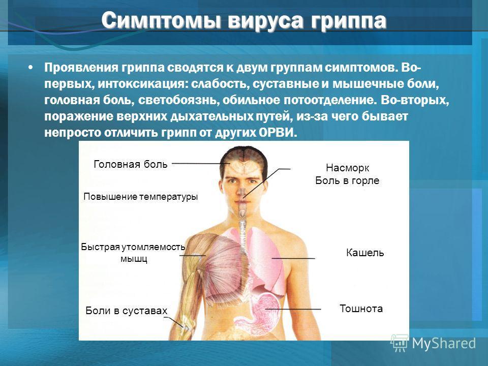 Симптомы вируса гриппа Проявления гриппа сводятся к двум группам симптомов. Во- первых, интоксикация: слабость, суставные и мышечные боли, головная боль, светобоязнь, обильное потоотделение. Во-вторых, поражение верхних дыхательных путей, из-за чего