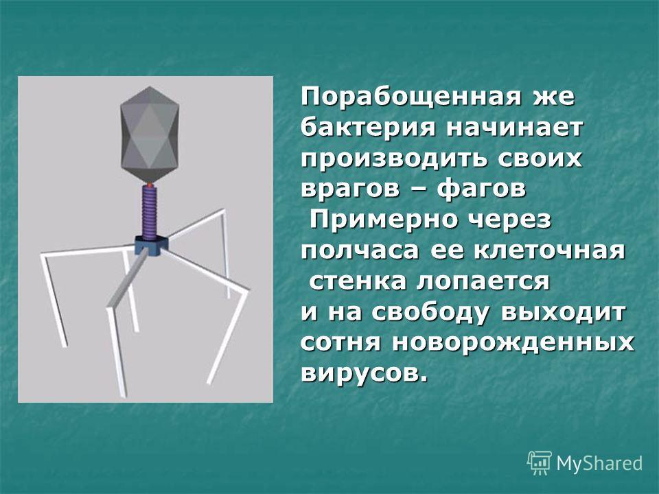 Схематичное строение Т-фага кишечной палочки со смешанным типом симметрии 1 - кубоидальная капсидная головка, 2 - двухнитчатая ДНК, 3 - стержень, 4 - спиралеобразный сокращающийся капсид ( чехол ), 5- базальная пластинка, 6 - хвостовые фибриллы