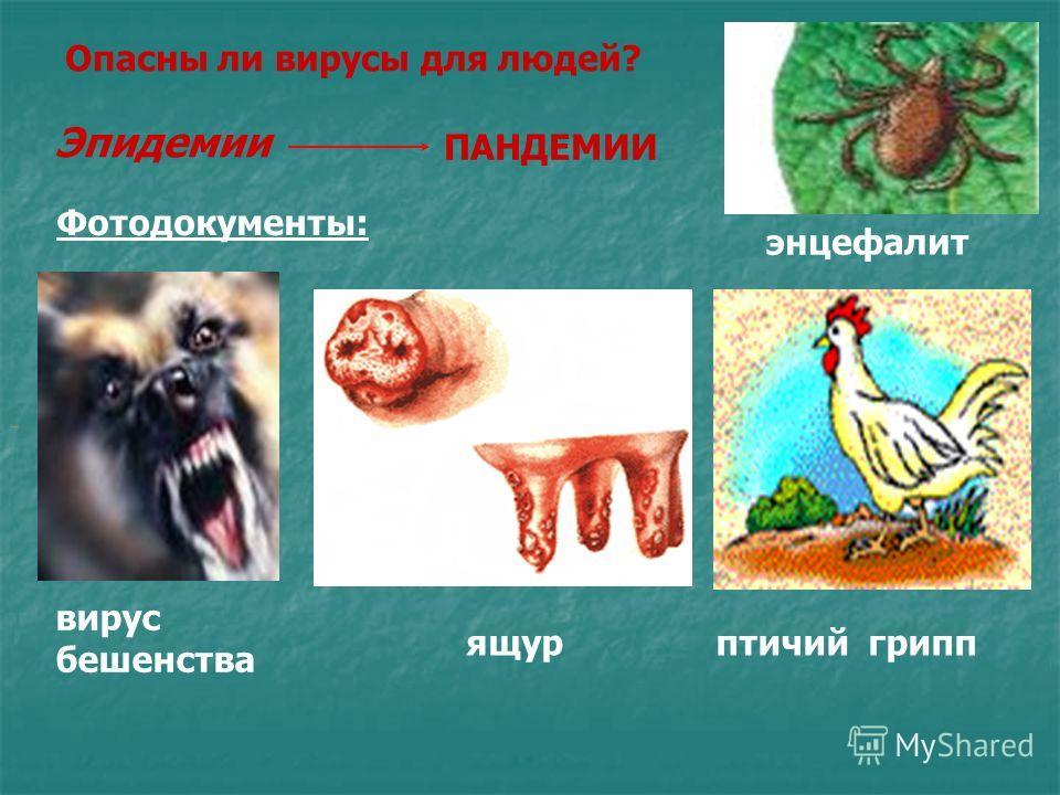 Корь. Корь одно из вирусных заболеваний чаще всего развивающаяся у детей. Длится:1,5 недели. Вирус:РНК содержащий. Вид:Сферической формы, крупная частица диаметр 150-200 нм Передаётся: Аэробным путем. Поражает: Кожа, мозг. Симптомы:Симптомы ОРЗ, мелк