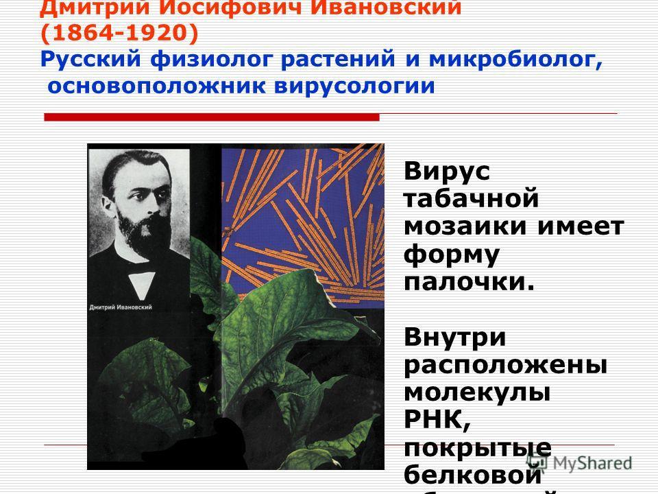 Дмитрий Иосифович Ивановский (1864-1920) Русский физиолог растений и микробиолог, основоположник вирусологии Вирус табачной мозаики имеет форму палочки. Внутри расположены молекулы РНК, покрытые белковой оболочкой