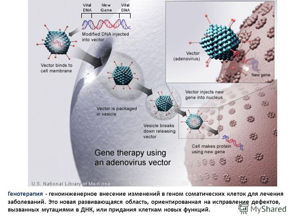 Генотерапия - геноинженерное внесение изменений в геном соматических клеток для лечения заболеваний. Это новая развивающаяся область, ориентированная на исправление дефектов, вызванных мутациями в ДНК, или придания клеткам новых функций.