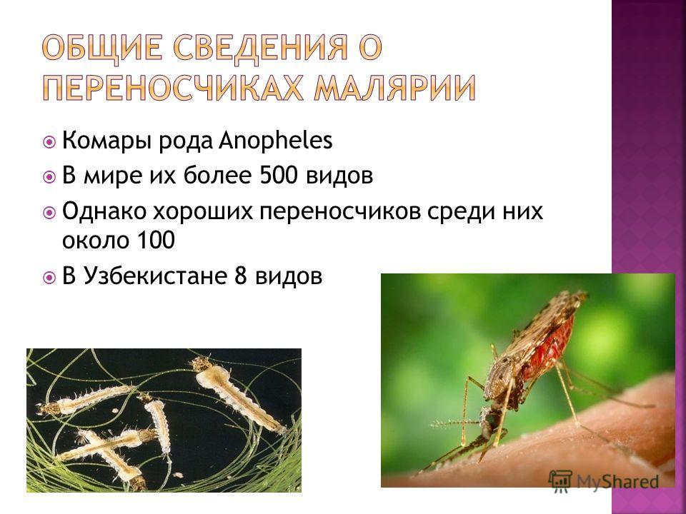 Комары рода Anopheles В мире их более 500 видов Однако хороших переносчиков среди них около 100 В Узбекистане 8 видов