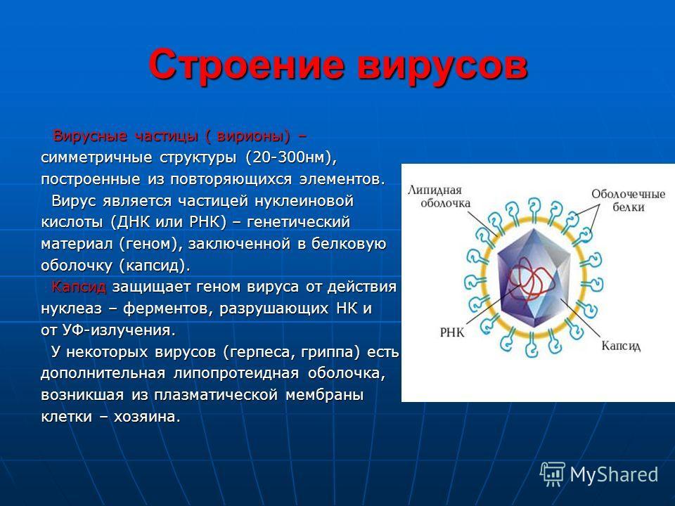 Строение вирусов Вирусные частицы ( вирионы) – Вирусные частицы ( вирионы) – симметричные структуры (20-300 нм), построенные из повторяющихся элементов. Вирус является частицей нуклеиновой Вирус является частицей нуклеиновой кислоты (ДНК или РНК) – г