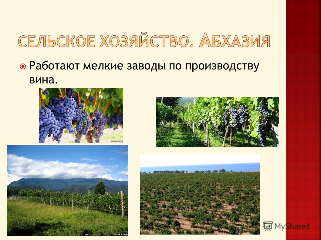Работают мелкие заводы по производству вина.