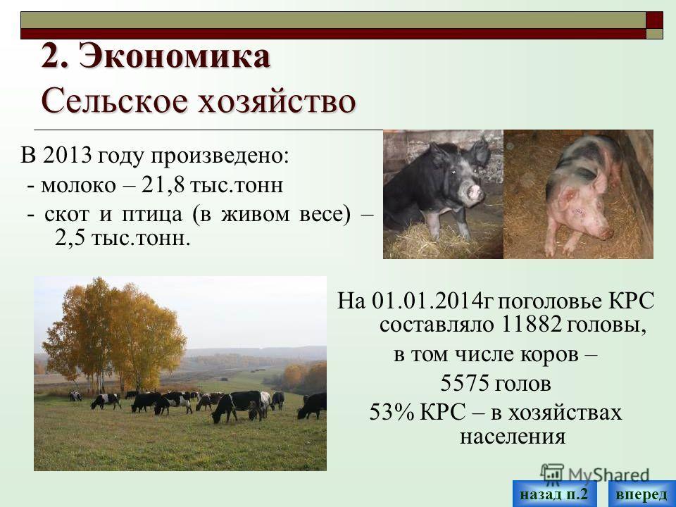 2. Экономика Сельское хозяйство В 2013 году произведено: - молоко – 21,8 тыс.тонн - скот и птица (в живом весе) – 2,5 тыс.тонн. впередназад п.2 На 01.01.2014 г поголовье КРС составляло 11882 головы, в том числе коров – 5575 голов 53% КРС – в хозяйств