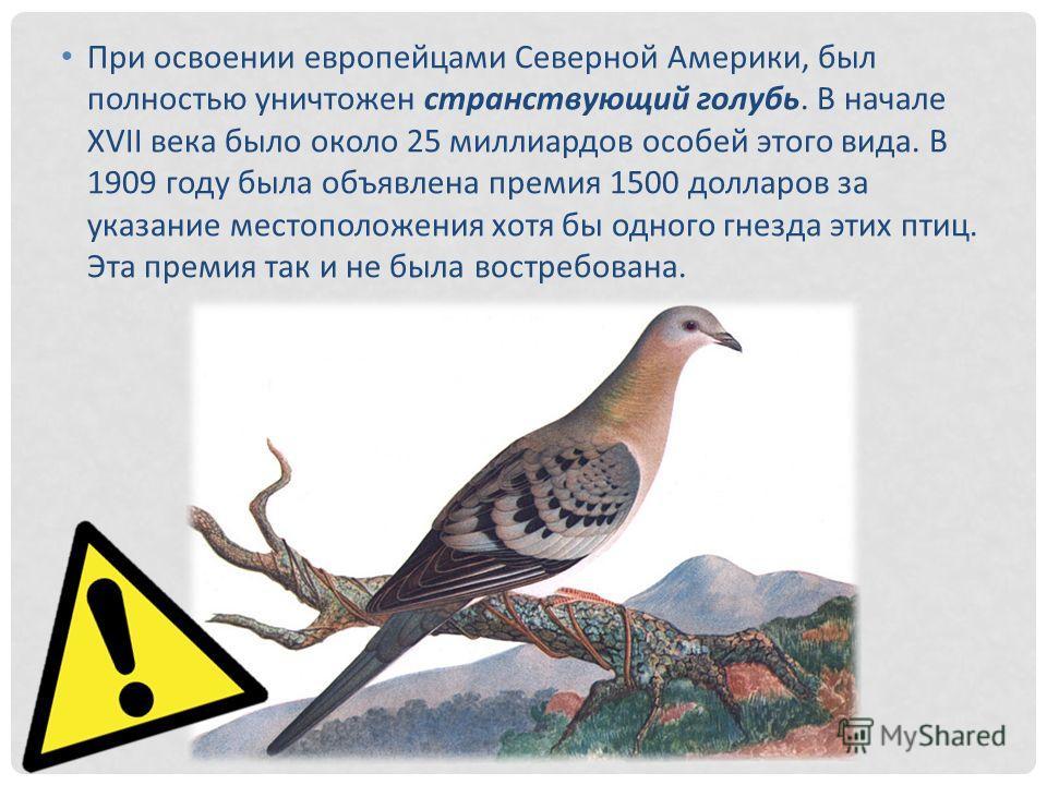 При освоении европейцами Северной Америки, был полностью уничтожен странствующий голубь. В начале XVII века было около 25 миллиардов особей этого вида. В 1909 году была объявлена премия 1500 долларов за указание местоположения хотя бы одного гнезда э