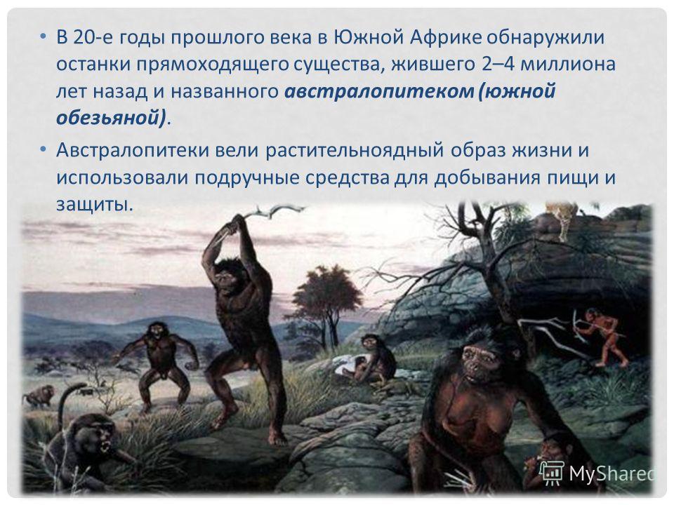 В 20-е годы прошлого века в Южной Африке обнаружили останки прямоходящего существа, жившего 2–4 миллиона лет назад и названного австралопитеком (южной обезьяной). Австралопитеки вели растительноядный образ жизни и использовали подручные средства для