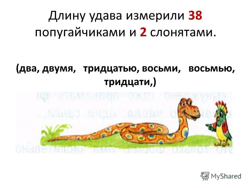Длину удава измерили 38 попугайчиками и 2 слонятами. (два, двумя, тридцатью, восьми, восьмью, тридцати,)