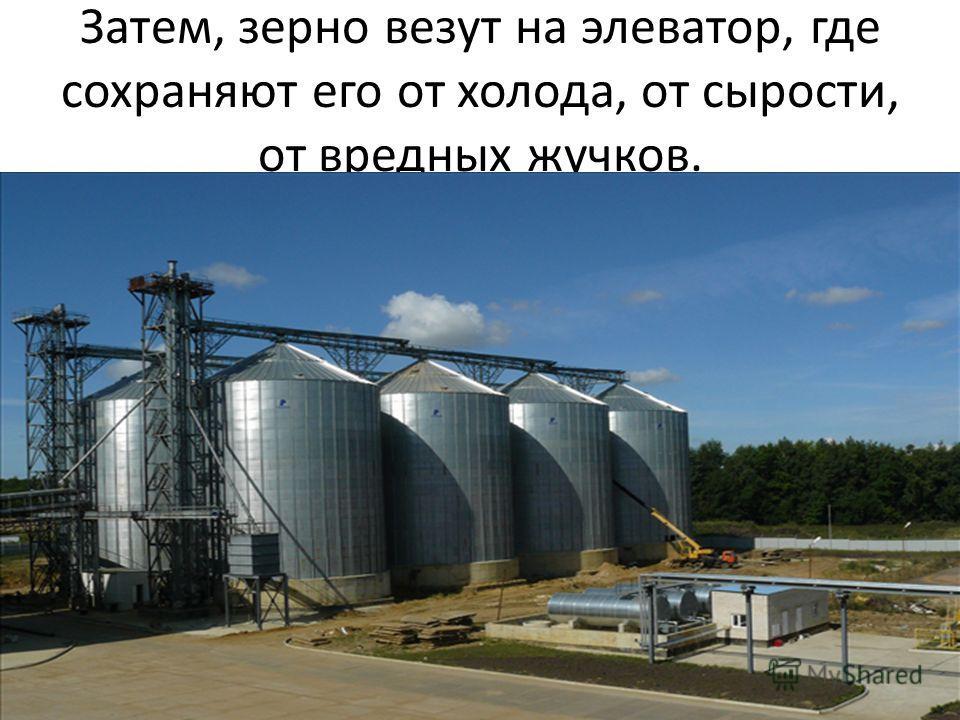 Затем, зерно везут на элеватор, где сохраняют его от холода, от сырости, от вредных жучков.