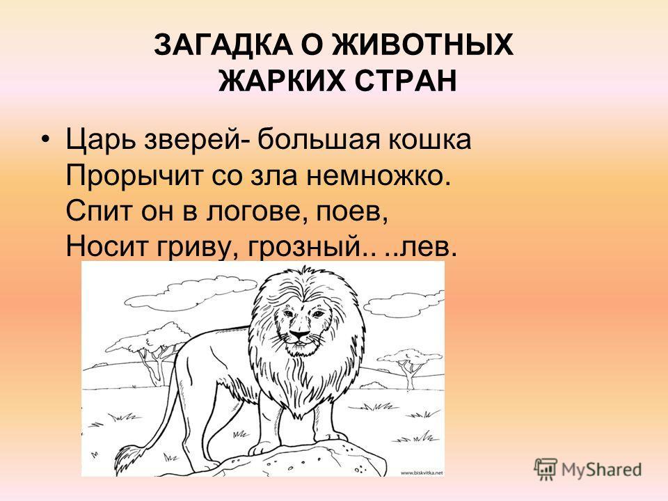 ЗАГАДКА О ЖИВОТНЫХ ЖАРКИХ СТРАН Царь зверей- большая кошка Прорычит со зла немножко. Спит он в логове, поев, Носит гриву, грозный....лев.