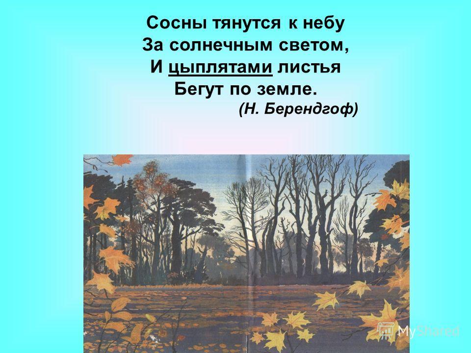 Сосны тянутся к небу За солнечным светом, И цыплятами листья Бегут по земле. (Н. Берендгоф)