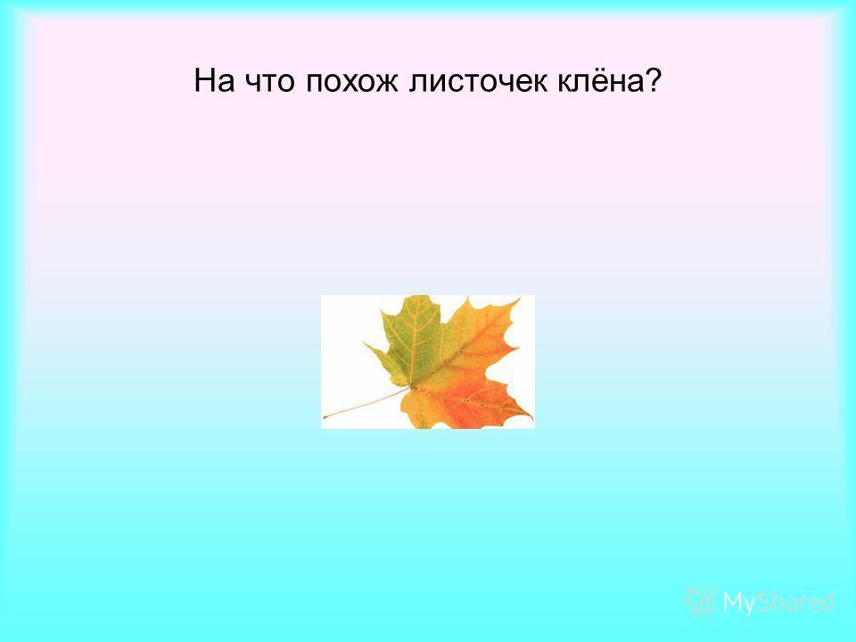 На что похож листочек клёна?