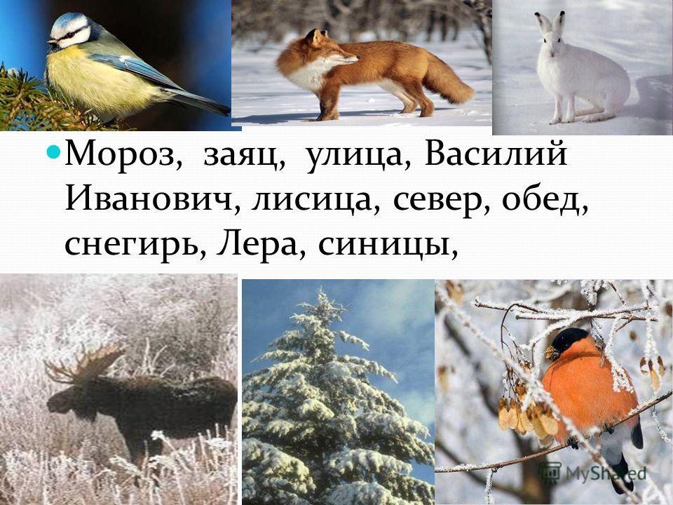 Мороз, заяц, улица, Василий Иванович, лилица, север, обед, снегирь, Лера, синицы,
