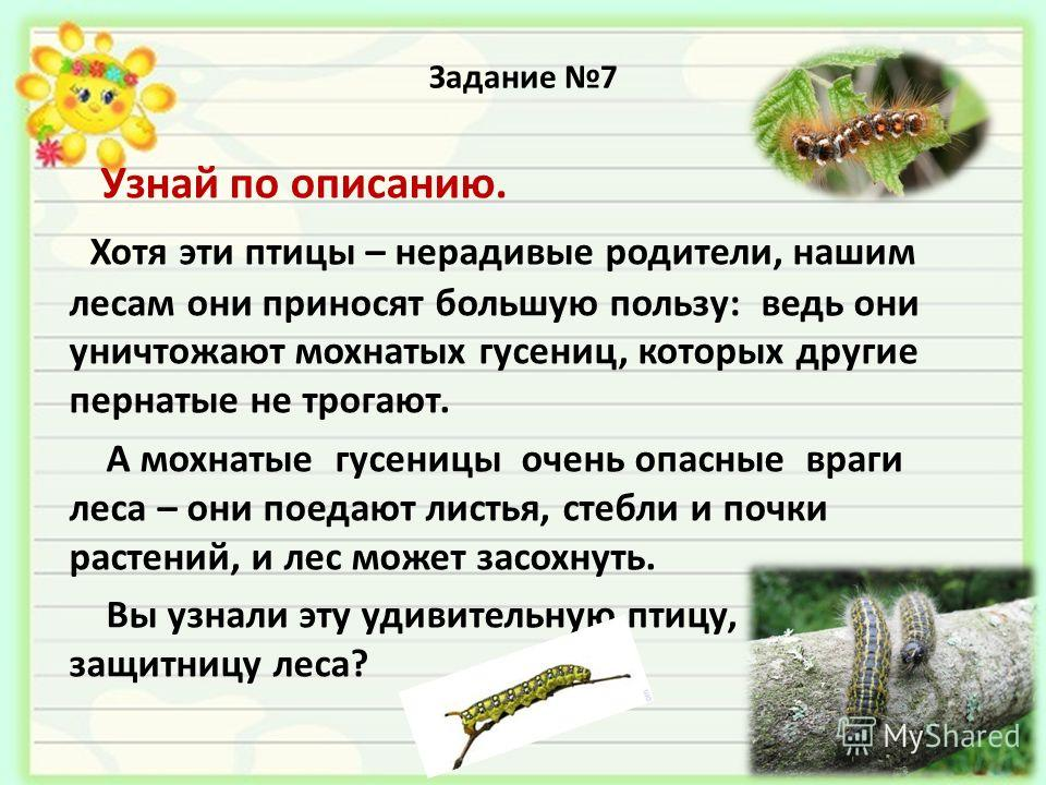 Задание 7 Узнай по описанию. Хотя эти птицы – нерадевые родетели, нашим лесам они приносят большую пользу: ведь они уничтожают мохнатых гусениц, которых другие пернатые не трогают. А мохнатые гусеницы очень опасные враги леса – они поедают листья, ст