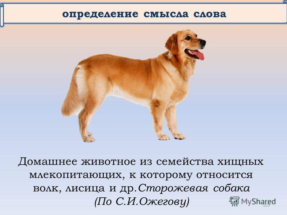 определение смысла слова Домашнее животное из семейства хищных млекопитающих, к которому относится волк, лисица и др. Сторожевая собака (По С.И.Ожегову) 103