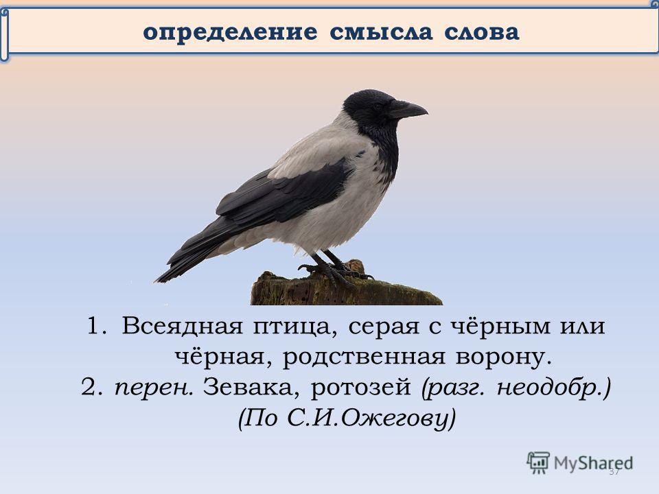 определение смысла слова 1. Всеядная птица, серая с чёрным или чёрная, родственная ворону. 2. перен. Зевака, ротозей (разг. неодобр.) (По С.И.Ожегову) 37