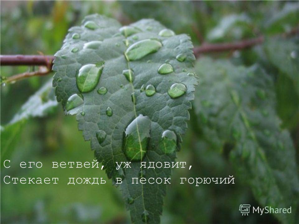 С его ветвей, уж ядовит, Стекает дождь в песок горючий