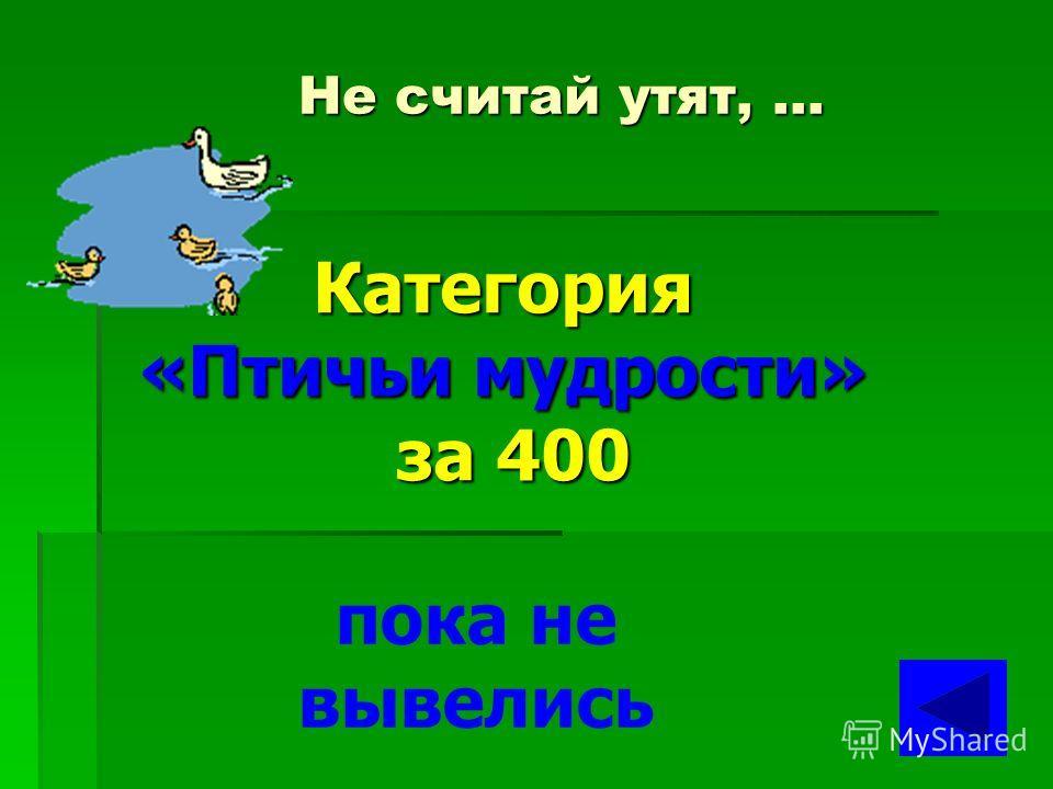 Старого воробья на … Категория «Птичьи мудрости» за 300 мякине не проведешь