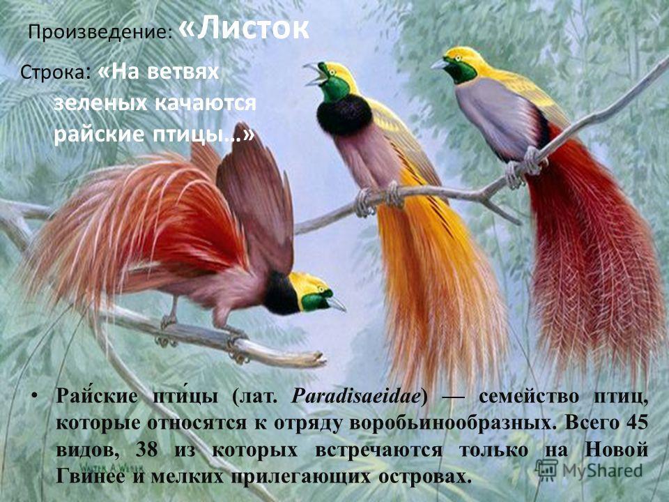 Рай́ские пти́цы (лат. Paradisaeidae) семейство птиц, которые относятся к отряду воробьинообразных. Всего 45 видов, 38 из которых встречаются только на Новой Гвинее и мелких прилегающих островах. Произведение: «Листок Строка : «На ветвях зеленых качаю
