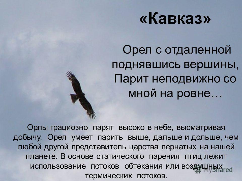 «Кавказ» Орел с отдаленной поднявшись вершины, Парит неподвижно со мной на ровне… Орлы грациозно парят высоко в небе, высматривая добычу. Орел умеет парить выше, дальше и дольше, чем любой другой представитель царства пернатых на нашей планете. В осн