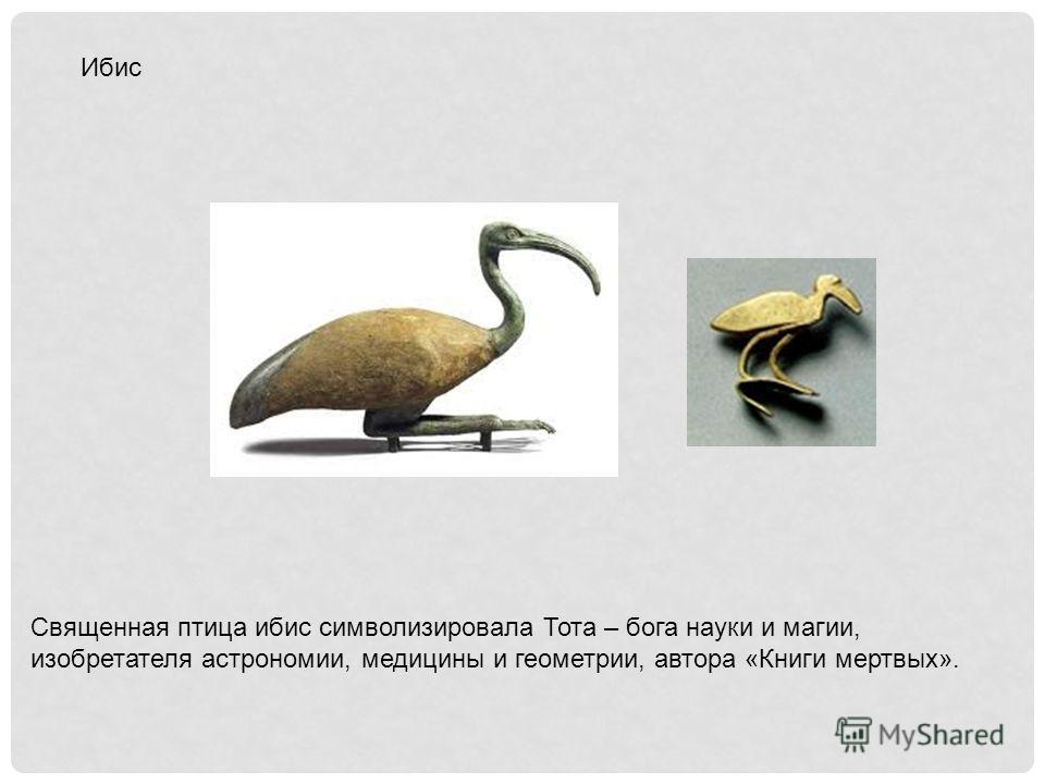 Ибис Священная птица ибис символизировала Тота – бога науки и магии, изобретателя астрономии, медицины и геометрии, автора «Книги мертвых».