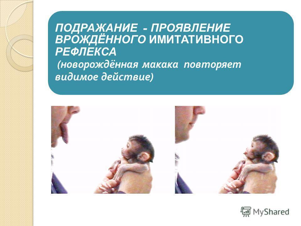 ПОДРАЖАНИЕ - ПРОЯВЛЕНИЕ ВРОЖДЁННОГО ИМИТАТИВНОГО РЕФЛЕКСА ( новорождённая макака повторяет видимое действие )