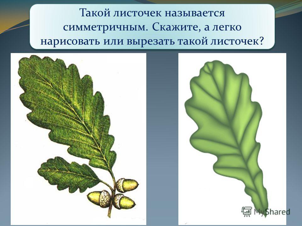 Что вас удивляет? Чем отличаются эти листочки? Какой листочек вам больше нравится? Такой листочек называется симметричным. Скажите, а легко нарисовать или вырезать такой листочек?