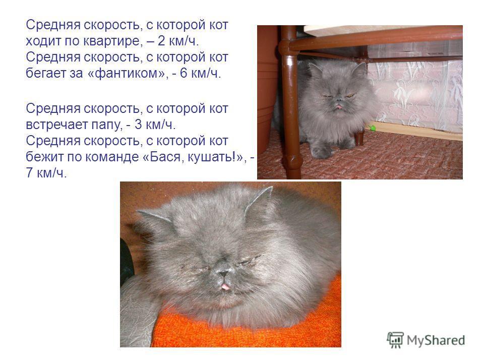 Средняя скорость, с которой кот ходит по квартире, – 2 км/ч. Средняя скорость, с которой кот бегает за «фантиком», - 6 км/ч. Средняя скорость, с которой кот встречает папу, - 3 км/ч. Средняя скорость, с которой кот бежит по команде «Бася, кушать!», -