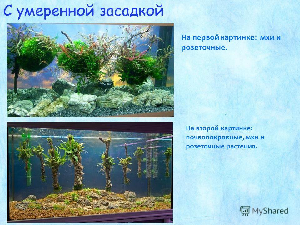 С умеренной засадкой На первой картинке: мхи и розеточные. На второй картинке: почвопокровные, мхи и розеточные растения.