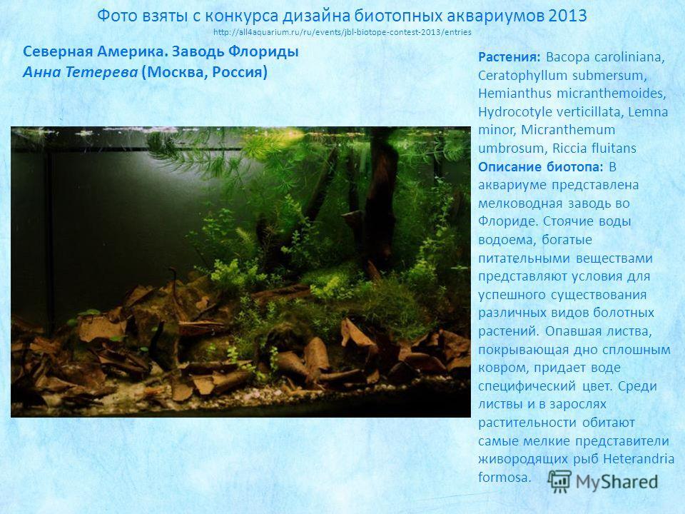 Фото взяты с конкурса дизайна биотропных аквариумов 2013 http://all4aquarium.ru/ru/events/jbl-biotope-contest-2013/entries Растения: Bacopa caroliniana, Ceratophyllum submersum, Hemianthus micranthemoides, Hydrocotyle verticillata, Lemna minor, Micra
